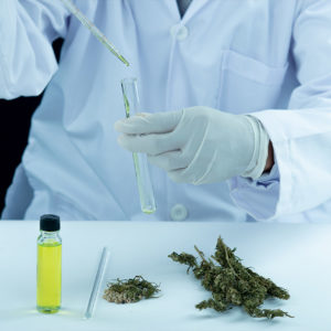 Scientist analyzing synthetic cannabinoids